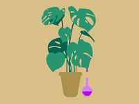 Monstera is Poisonous