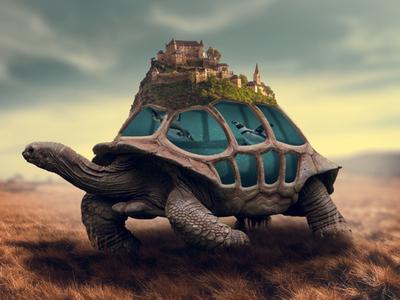 Tortoise Aquarium