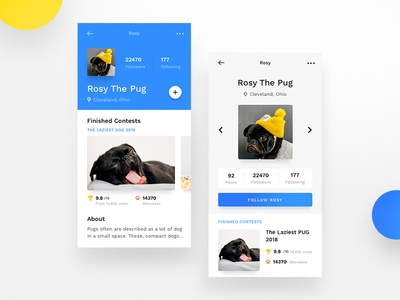 Mobile Profile Cards - The Pug app cards clean ios mobile contest blue dog pug user profile