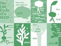 The Life Cycle of a Seed