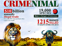 Crimenimal Flyer