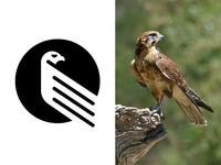Falcon Mark