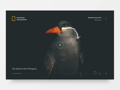 NatGeo Penguins website minimal clean colours 2d marketing typography logo design branding web ixd ux ui
