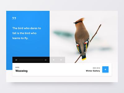Bird Gallery flat web website minimal clean colours 2d marketing typography logo design branding ixd ux ui