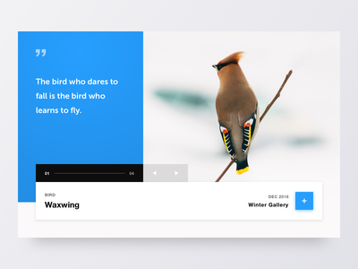Bird Gallery flat web website minimal clean colours 2d marketing typography logo design branding ixd ux ui