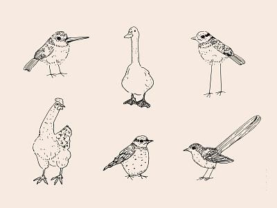Birdies weirdies bird icon birdsday fowl bird logo dribbble branding illustration design dutch handrawn fineliner weird funny handdraw animal legs blackbird chicken duck birds