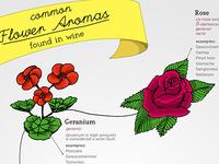 Common Flower Aromas In Wine