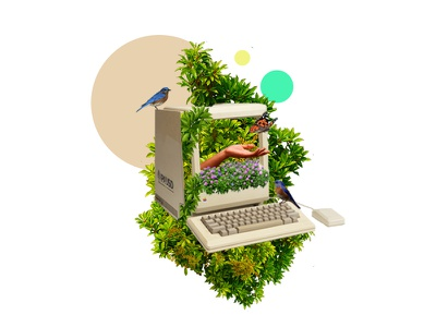 Collage web design  surrealism art dribbble design nature birds animals photoshop artcollage collage illustration
