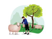 Man herding a sheep on the grass land