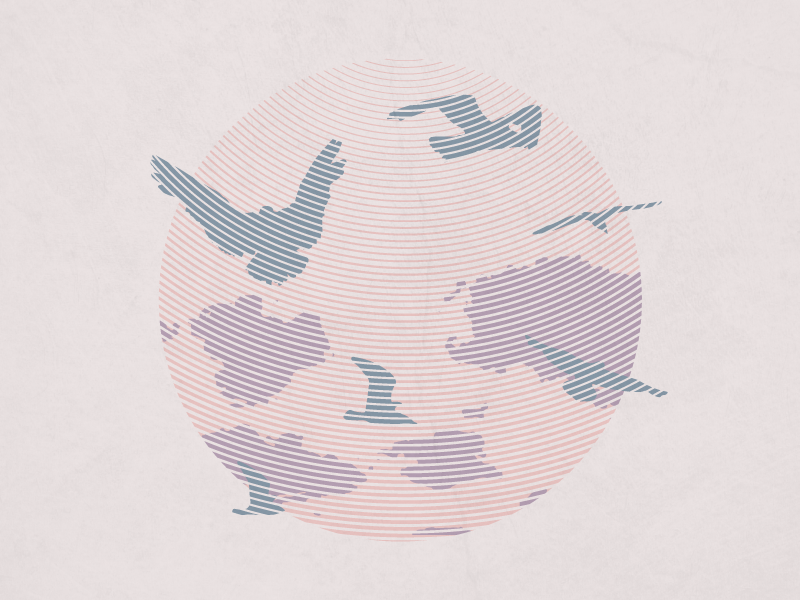 Apf illustration