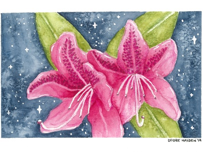Coast Rhododendron botanical flower seattle stateflower washington rhododendron watercolor floral