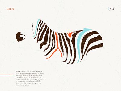 Equus Cebra illustration draw