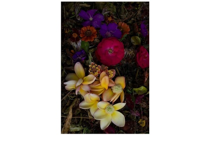 The sheep's flower shop flower abstract art photography