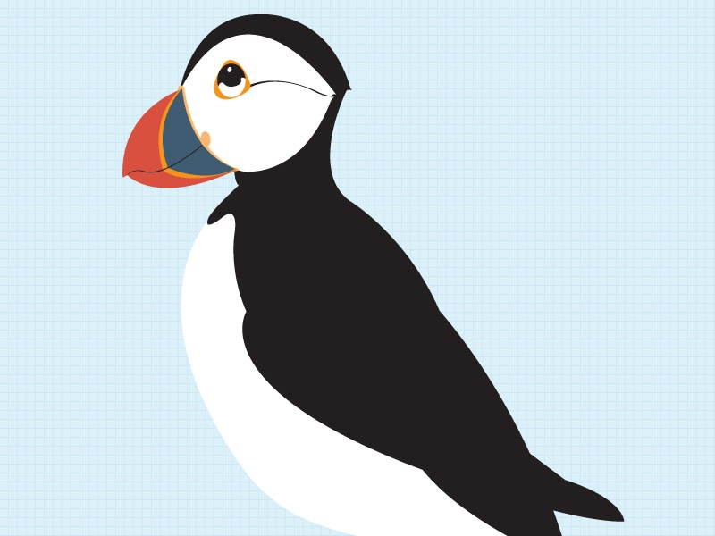 Puffin illo puffin childrens book bird illustration vector kids book kids looking up