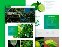 La Palma: Website