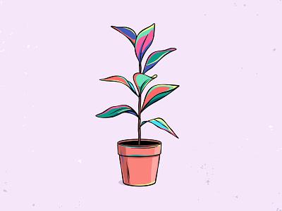 Plant in a pot illustration drawing ficus flower pot plant
