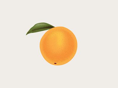 Orange Illustration citrus stippling stipple fruit orange illustration