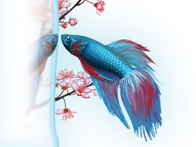 Beta Fish illustration vector japanesse blossom cherry sakura reflection sake fighting fish beta