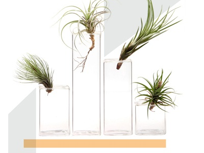 Chive Planters Homepage Image ecommerce graphic shapes