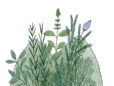 Ervas de Proteção botanical art botanical illustration adobe sketch healing selfcare health illustration digital painting botanical plants herbs