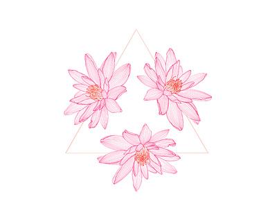 Victoria amazonica flower procreate digital illustration brazilian botanical illustration illustration botanical