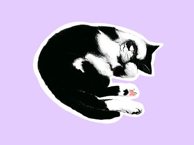 Little cat cute cat pets commission procreate app illustration