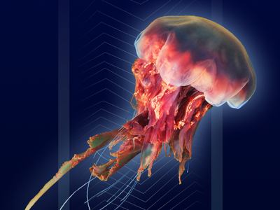 Underwater World Encyclopedia interface education encyclopedia tutorial underwater sea ui ux mobile app design