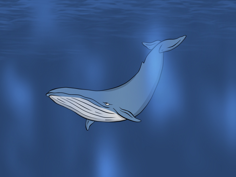 Whale...Whale...Whale... simple cartoon graphic design sea creature design illustration ocean aquarium mammal whale