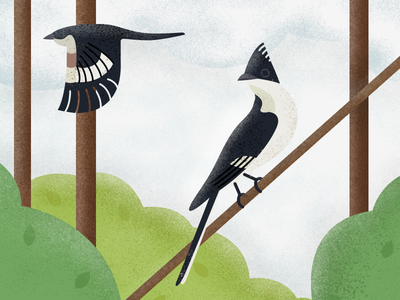 Two pied cuckoos