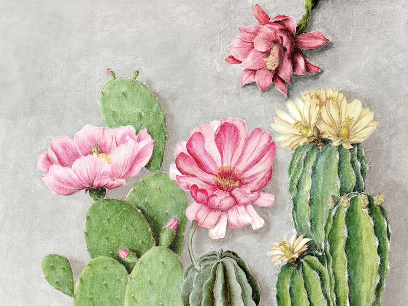 Flowering cacti painting drawing illustration cactus flower flowers