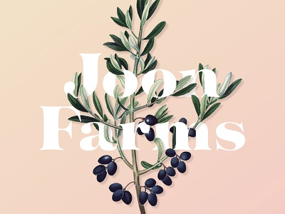Joon Farms olive oil farm scientific illustration olive