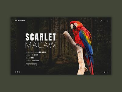 Parrot landing page concept web design graphic design graphic ux layout photoshop website web animals ui
