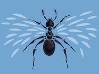 Abstract Flying Ant