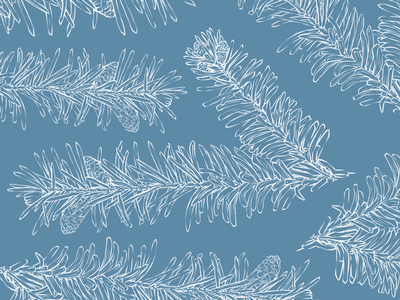 Picea plan pattern