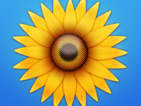 Flower: Yellow