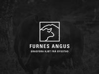 Furnes Angus