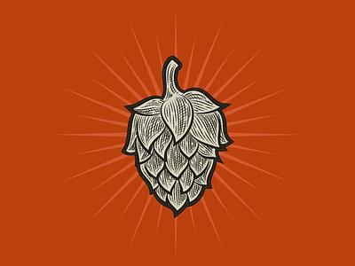 Hop Illustration alcohol drinking brewery crosshatch engraved illustration beer hop