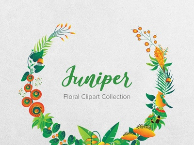 Juniper Floral Clipart Collection vector illustrations vector illustration vector flowers vector flower illustration pattern design nature illustration instantdownload greenery green gogivo flower wreaths flowerillustration flower graphics flower clipart flower and birds floral patterns floral design floral clipart cliparts clipart