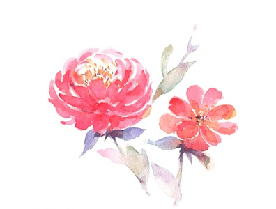 Free Watercolor Peony Flower Painting Clipart | PNG