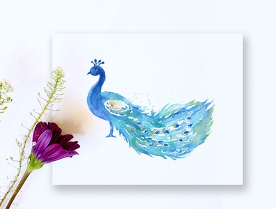 Free Peacock Watercolor Painting