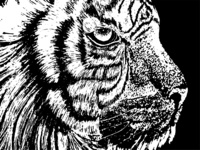 Black and white tiger illustration