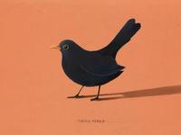 BIRDCEMBER (drawin one bird a day in December)