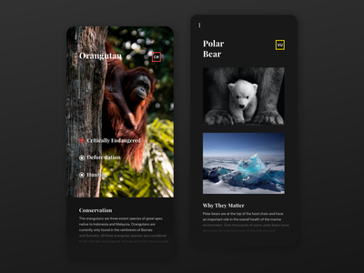 More information - Mobile App national geographic concept application user experience mobile app ux ui