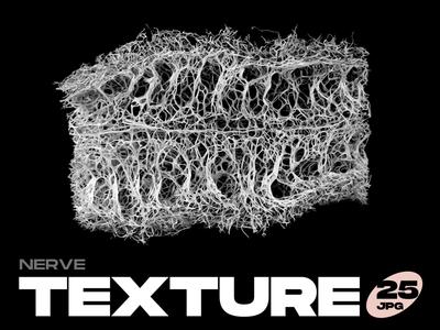 Nerve Textures