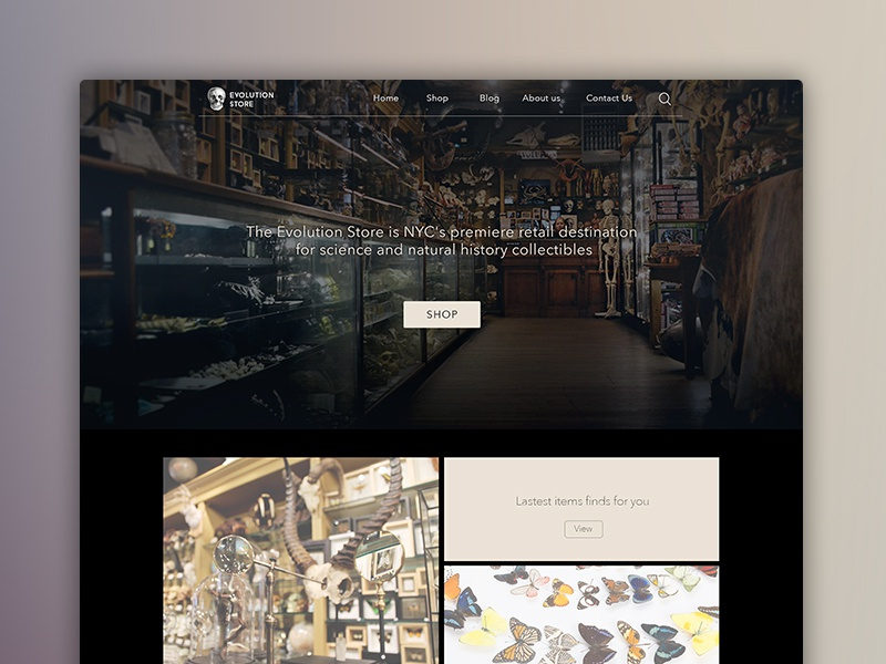 Evolution Store Redesign ux webdesign evolution store icon layout taxidermy