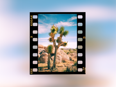 Image from film with edge (rebate) frame photo film lomo