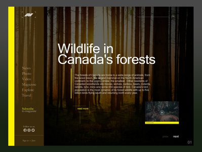 Wildlife in canada's forest