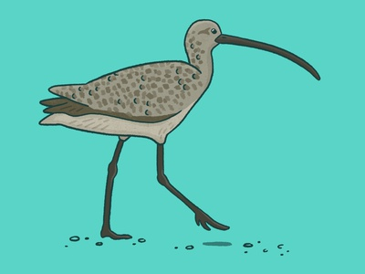Long-billed curlew digital art bird procreate art procreate drawing nature illustration art