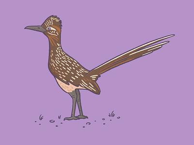 Road runner bird bird digital art procreate art procreate drawing nature illustration art