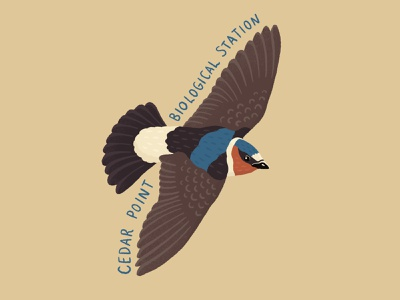 Cliff swallow sticker birds procreate digital art design nature illustration art
